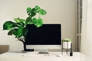White home office desk set up with green house plants