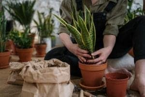 Person Holding Green Cactus Plant
