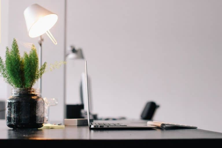 Using a regular table lamp to grow plants