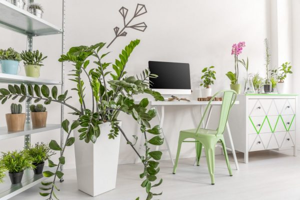 Shot of a houseplants in a bright, minimalist home office interior