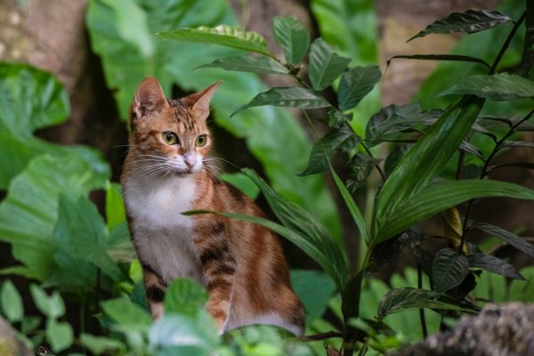 Cat in houseplant foliage